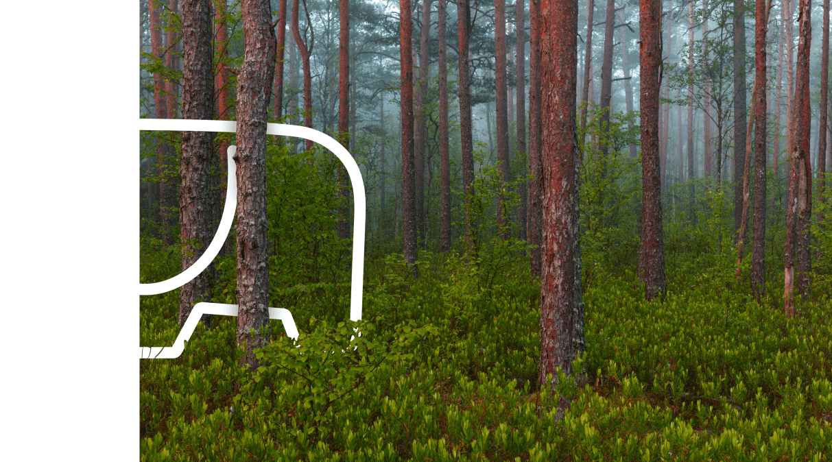 "Barrus* – the ""elephant"" in the pine forests of Võru County"